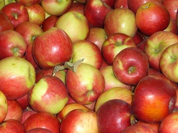 Ābolu vīns – ābolu vīna pagatavošana