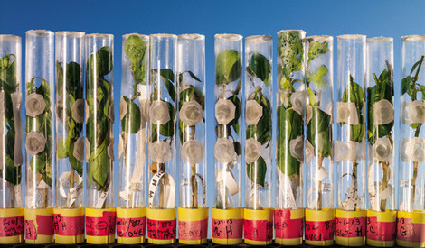 Pārtikas nākotne - Nākamā zaļā revolūcija