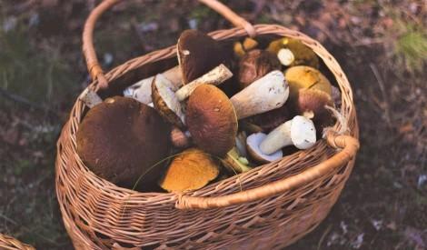 Pilni klēpji meža sēņu – ierosinājumi gatavošanai no Mārtiņa Sirmā