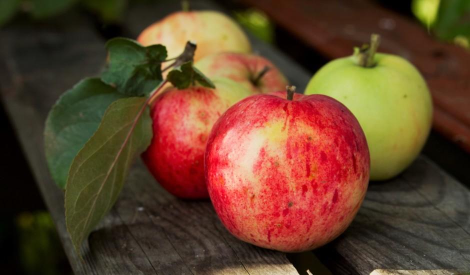 Āboli — kāpēc gan tie būtu jāēd?