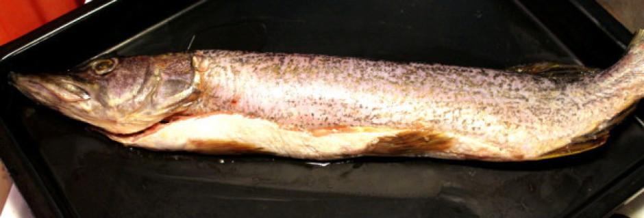 Zivi notīra. Līdaku apkaisa no visām pusēm ar sāli un pipari...
