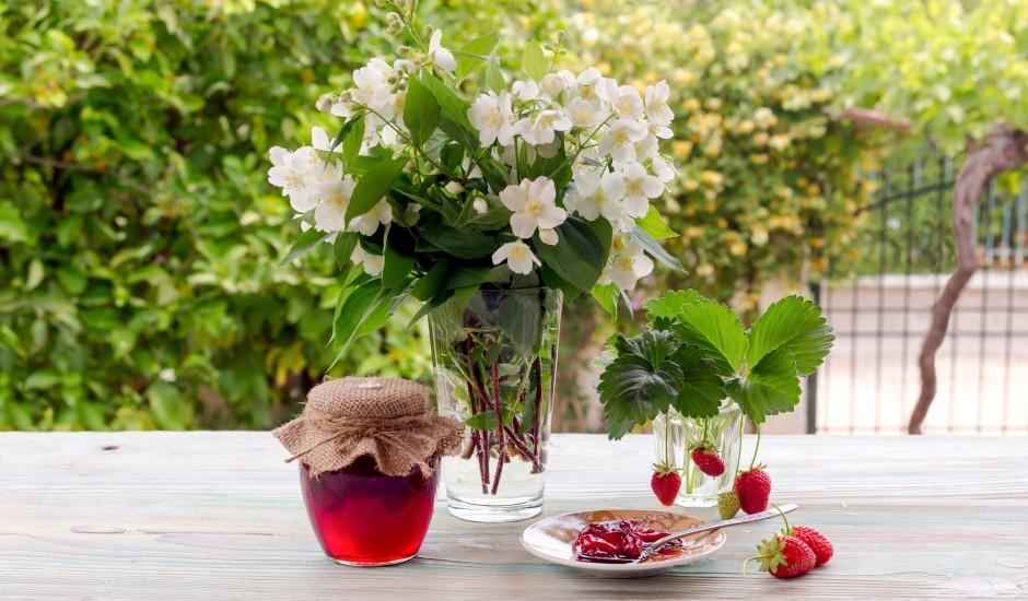 Tests: ziedi un lapas - vai atpazīsi ogas un augļus?