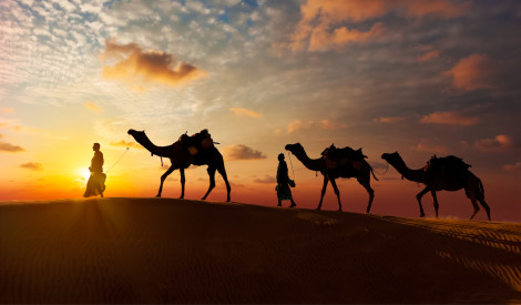 Vai kamieļu piens aizstās govs pienu? Austrālijai ir plāns!