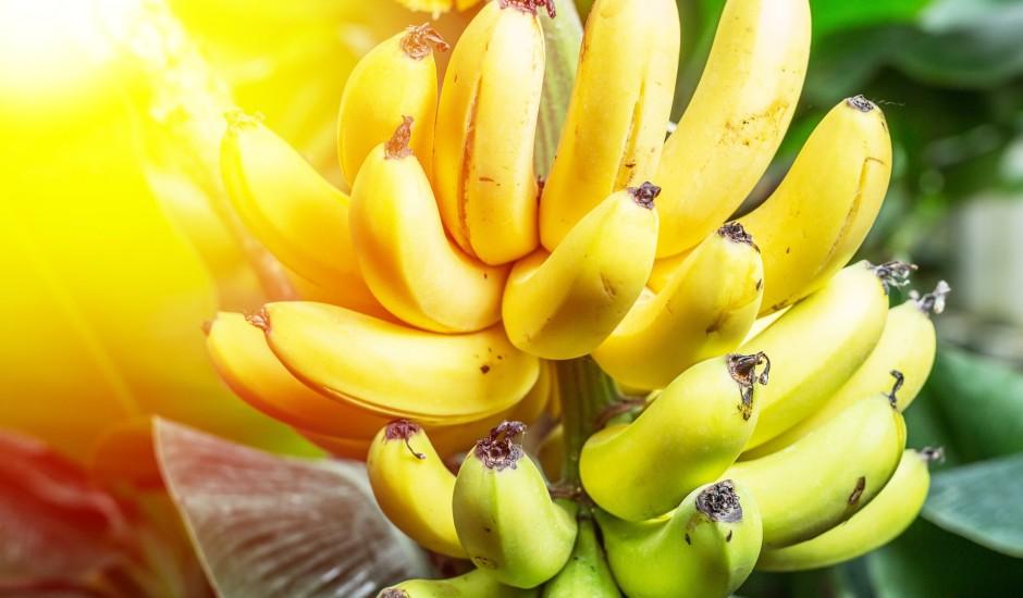Pieaugs banānu cena vai ir risks palikt bez tiem pavisam?