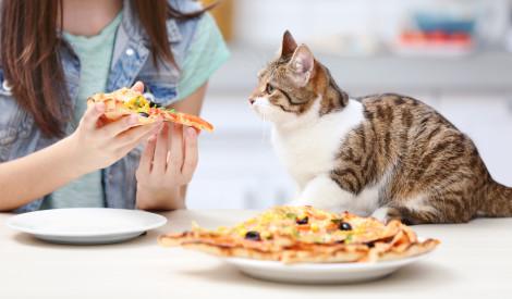 Brīdis izklaidei: izveido picu un noskaidro savu iekšējo dzīvnieku